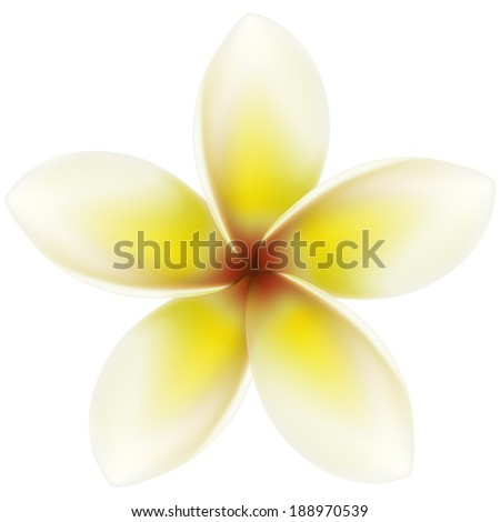 Layered vector illustration of Plumeria. - stock vector