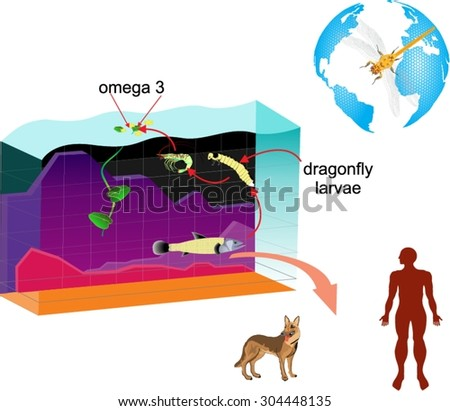 First law motion infographic diagram examples stock vector for Koi pond diagram