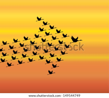 Leadership and Synergy Concept Illustration : A number of Swans flying against a Bright White sky background lead by a big dark leader swan - stock vector