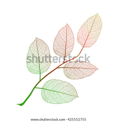 Leaf isolated. Vector illustration. EPS 10 - stock vector