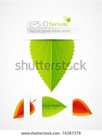 Leaf labels - stock vector