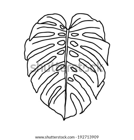 Leaf of tropical plant - Philodendron, vector illustration