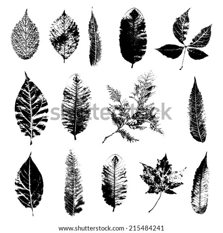 Leaf silhouette collection, foliage set, vector - stock vector