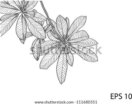 Leaf Vector Line Sketch Up, EPS 10. - stock vector