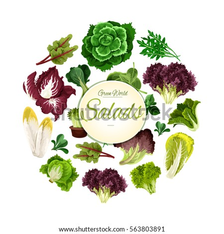 Leafy Salads Of Lettuce Vegetables Lollo Rossa And Radicchio Chicory Salad And Spinach Arugula