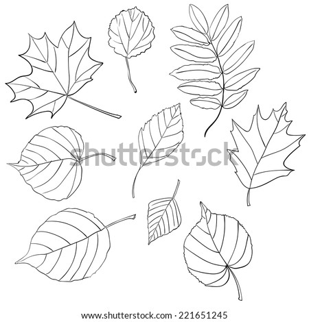 Leaves Doodles. Vector Illustration. Hand-drawn Style. - stock vector