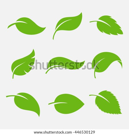 Leaves icon vector set isolated on white background. Various shapes of green leaves of trees and plants. Elements for eco and bio logos.  - stock vector