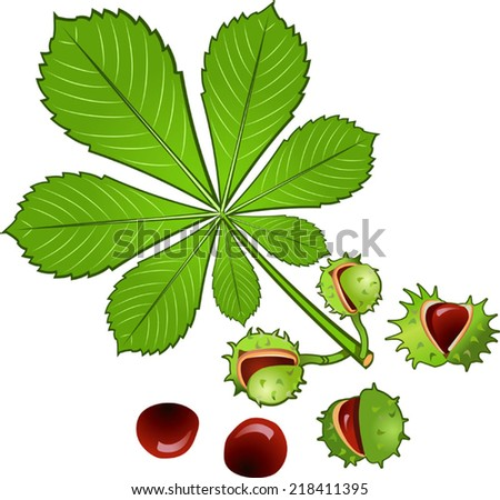 Leaves Horse Chestnut Tree Conkers Shell Stock Vector 218411395