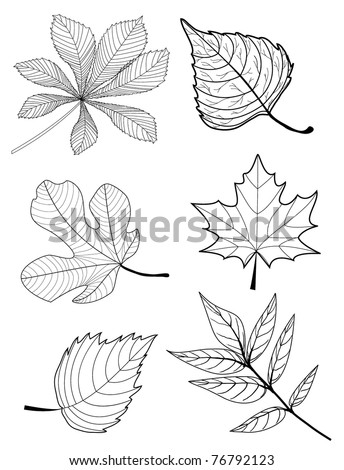 leaves sketch - collection - stock vector