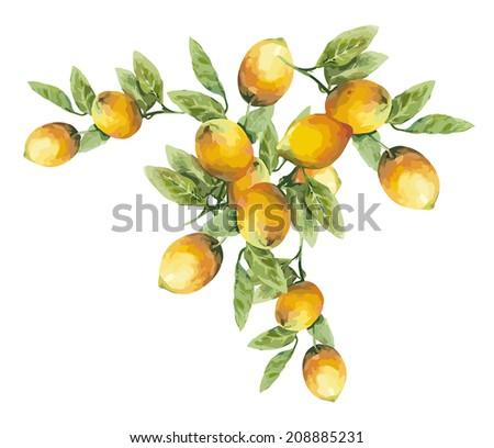 Lemons - stock vector