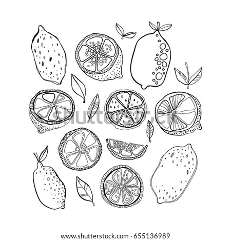 Black And White Citrus Fruits For Coloring Pages Doodle Illustration Design