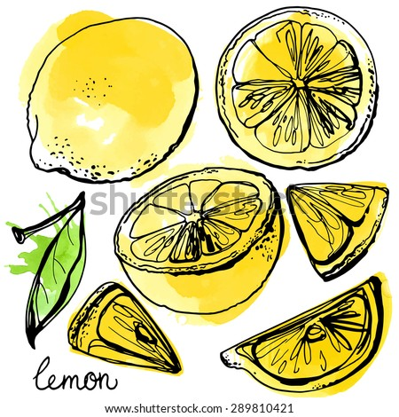 Lemons black line drawn on a white background. Vector ...