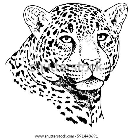 leopard tattoo stock vector 47609719 shutterstock cheetah clip art background cheetah clip art background