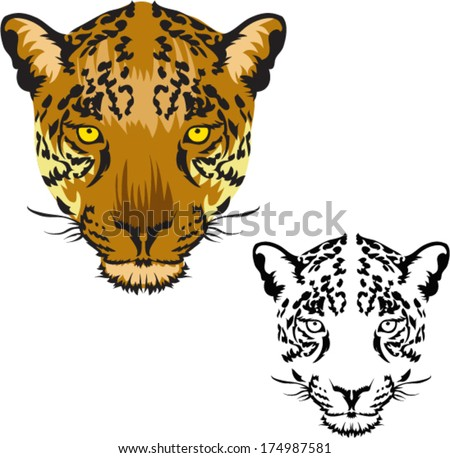 Leopard face Vector  - stock vector