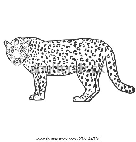 leopard outline illustration vector