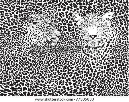 leopard pattern background - stock vector