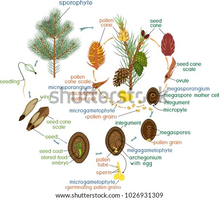 Plant Life Cycle Stock Images, Royalty-Free Images
