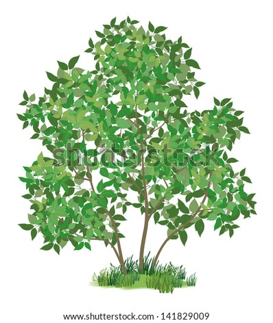 Lilac tree with leaves and green grass, isolated on white background. Vector - stock vector