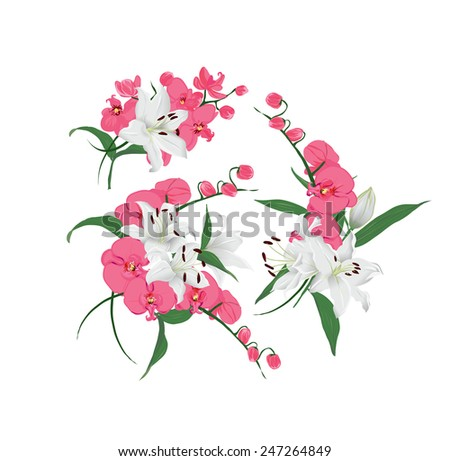 Lilies and pink orchids bouquet vector design elements - stock vector