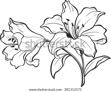 stock vector lily flowers blooming lily card or floral background with blooming lilies flowers silhouette of 381312571