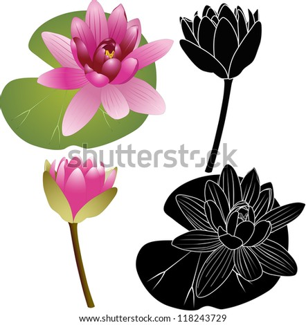 Lily of the Lotus of the water Lily - stock vector
