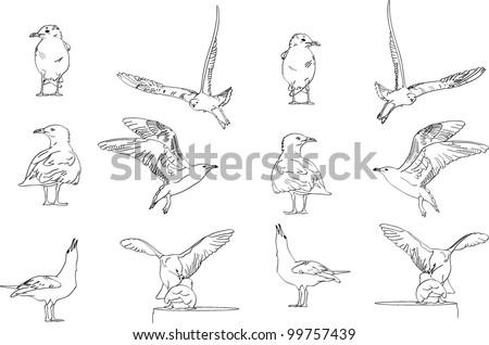 line art illustration of various seagulls - stock vector