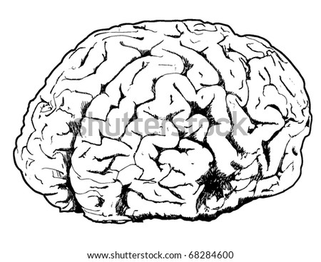 Line drawing of a brain - stock vector