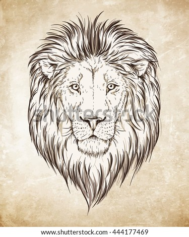 Lion head hand drawn graphic over grunge paper background vector illustration - stock vector