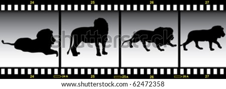 lion in frames of film - stock vector