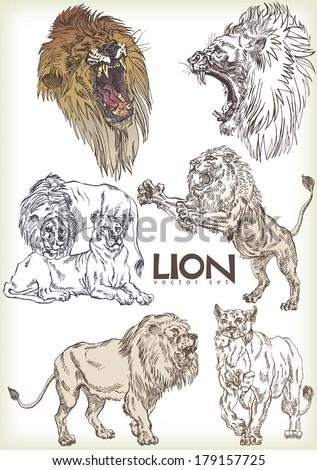lion vector sett - stock vector