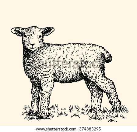 Little lamb - stock vector