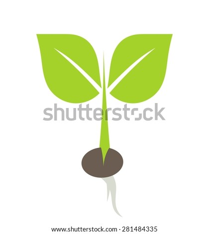 Little plant growing from seed illustration - stock vector