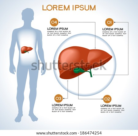 Liver Modern Medical Infographics Internal Organs Stock Vector