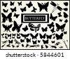 lots of butterfly vectors - stock vector