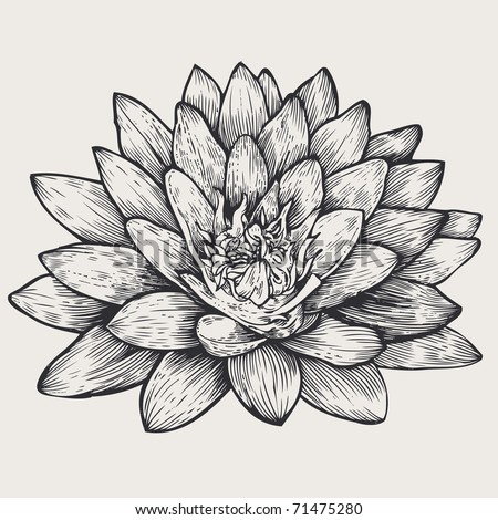 lotus, floral design element, engraved retro style. vector illustration - stock vector