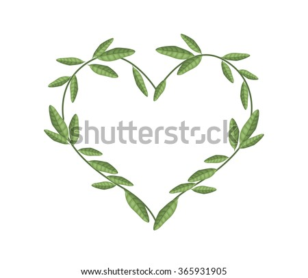 Love Concept, Illustration of Heart Shape Frame Made of Fresh Green Vine Leaves Isolated on A White Background. - stock vector