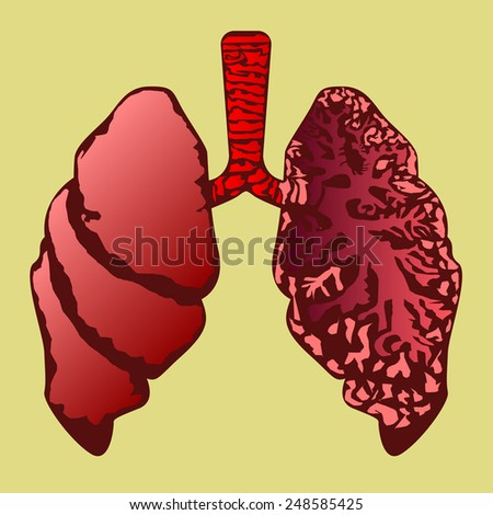 lung human anatomy - stock vector