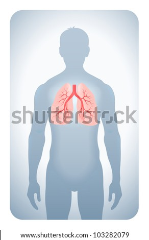 lungs highlighted on the silhouette of a man - stock vector