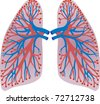 lungs of the person - stock vector