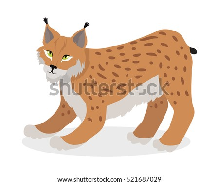 Bobcat Stock Images Royalty Free Images Amp Vectors