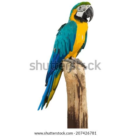 Macaw parrot bird, vector format - stock vector