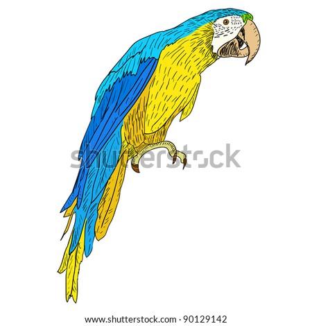 Macaws. Vector illustration. - stock vector