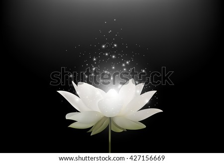 Magic White Lotus flower on black background.Vector - stock vector