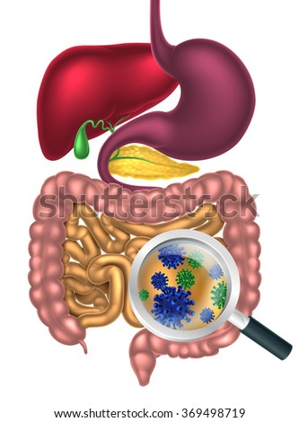 Magnifying glass showing bacteria or virus cells in the human digestive system, digestive tract or alimentary canal. Possibly good bacteria or gut flora such as that encouraged by pro biotic products - stock vector