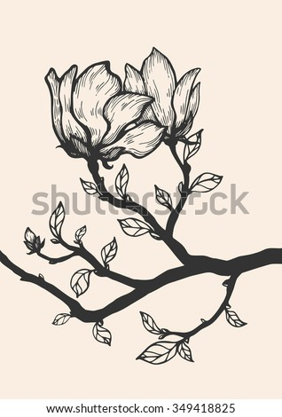Magnolia blossom tree branch. Floral engraving. Vector flower. Hand drawn artwork. Love bohemia concept for wedding, bridal invitation, card, ticket, branding, boutique logo, label. Black, beige - stock vector