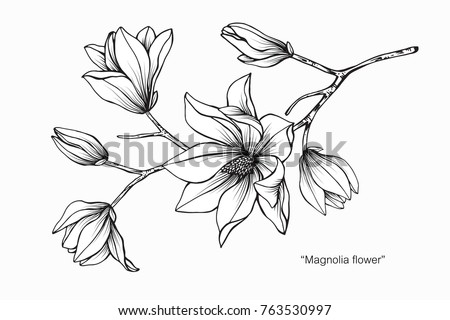 Magnolia flower drawing sketch black white stok vektr 763530997 magnolia flower drawing and sketch with black and white line art mightylinksfo