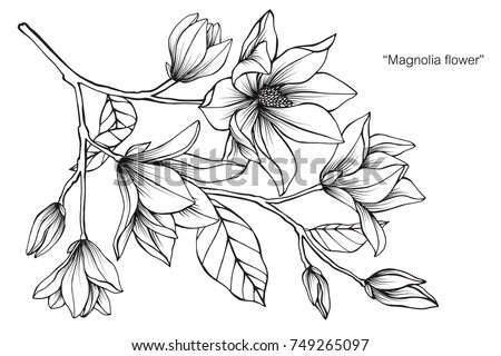 Magnolia flower drawing sketch black white stock vector 2018 magnolia flower drawing and sketch with black and white line art on white mightylinksfo Gallery