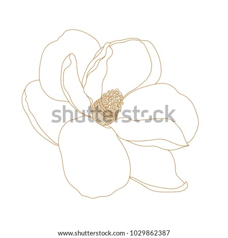 Magnolia flower top view isolated on stock vector 1029862387 magnolia flower top view isolated on whiteaphical hand drawn magnolia flowers maxwellsz