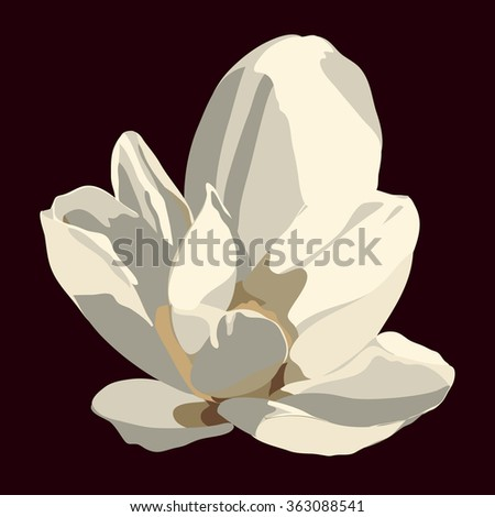 Magnolia flower. Vector isolated image
