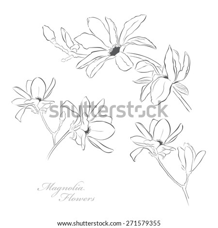 Magnolia flowers - stock vector